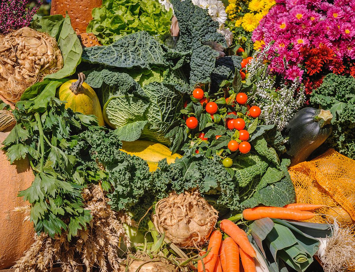 Mission-Food-Program-Harvest